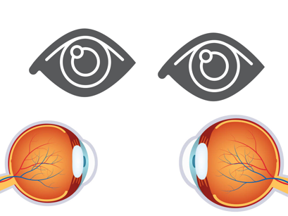 Everything We Need to Know About Human Eye