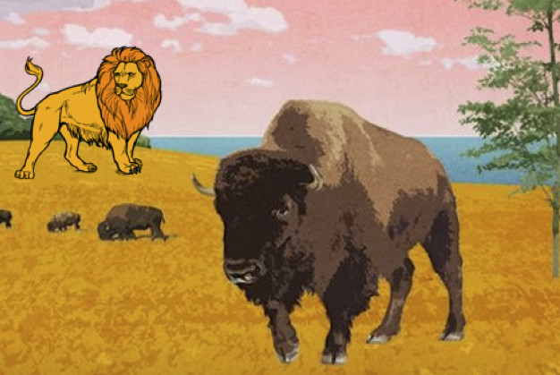 Story of a young Buffalo- Face your fears.